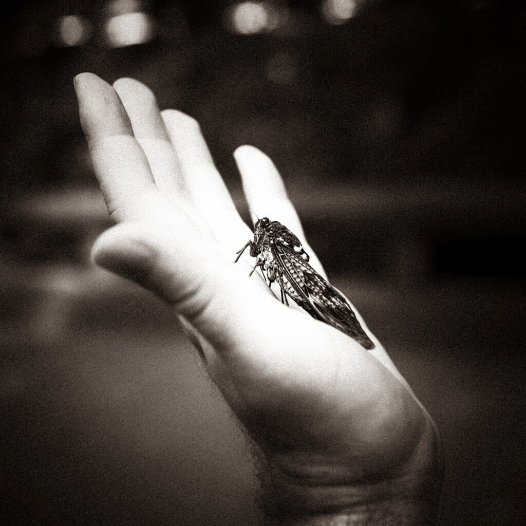 A cicada in my hand